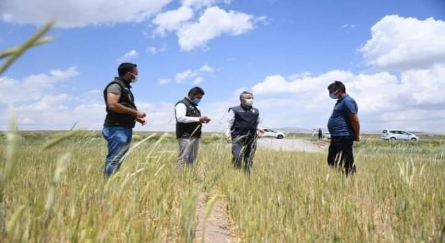 İl Tarım ve Orman Müdürü Şahin, Tomarzada hasar tespit çalışmalarına katıldı