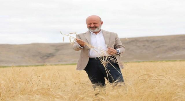 Kocasinanda ata yadigarı ve 28 kromozomlu gacer buğdayının hasadı yapıldı