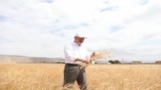 Toprak ve çiftçi dostu Başkan Çolakbayrakdarın milli ve yerli tohum hamlesi takdir topladı