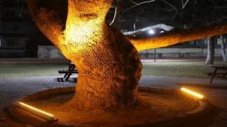 Kocasinanın tarihine ışık tutan çınar ağaçlarıyla görsel zenginlik